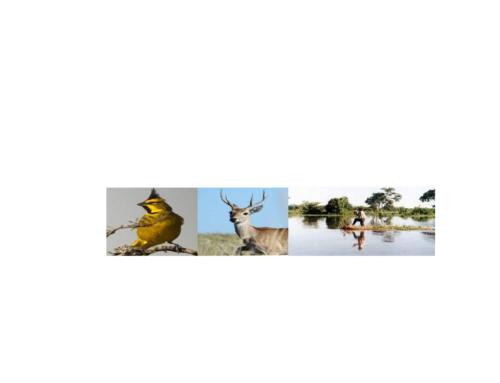 17 de Mayo 2018: Charla sobre Fauna autóctona santafesina